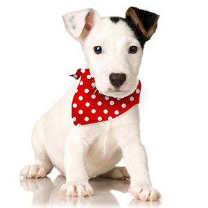 Puppy Bandana New Website