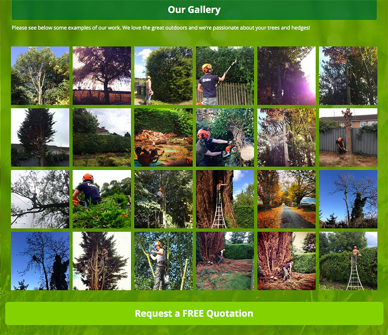 cj-tree-surgeons-gallery-blog